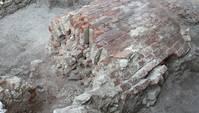Überreste eines Fundaments aus Backsteinen