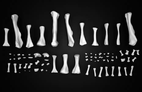 Computeranimation von Knochen verschiedener Größe auf schwarzem Grund