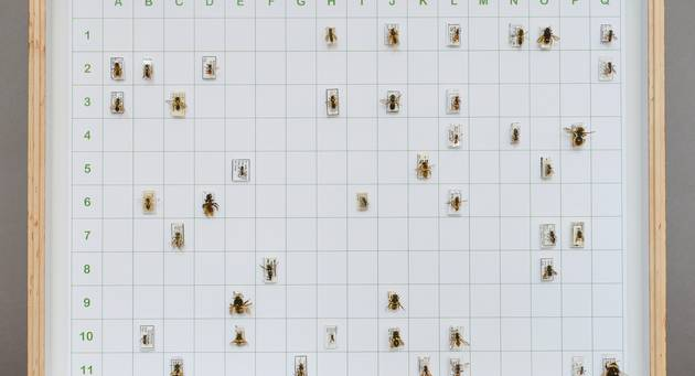 Diverse Bienen sind auf einem weißen, in Felder eingeteilten und von einem Rahmen umgebenen Papier angebracht
